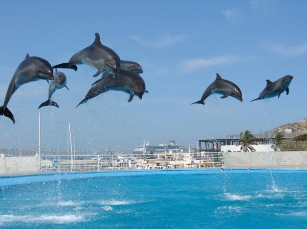 Dolphin Always! (5)